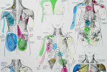 Anatomia i inne