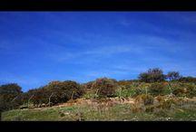 Wolf Park Antequera
