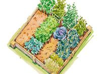 The Green Thumb Guide