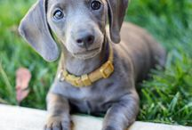 I want a pupppy! / by Lauren Lecklider