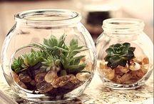 Plantas em frascos