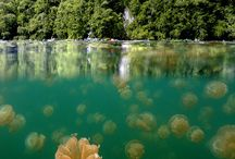Jellyfish Lake / Our new post is available on the blog: www.snorkelaroundtheworld.com
