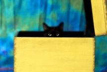 kit kats / cat, i'm a kitty cat. and i dance, dance, dance! / by MacKenzie