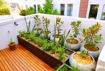 Balcony gardens