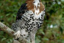 Aves Poderosas
