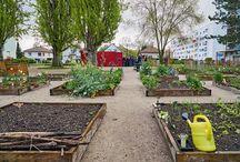 Jardins cultivés