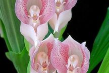 Mother Nature's Orchids