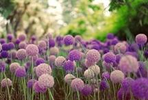 Folder violeta / Es el color violeta porque Me gusta