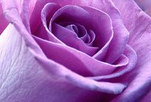 Purple / All things purple and mauve...