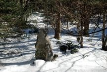 BALSAM/HAYNES/EAGLE-WINTER (CATSKILLS NEW YORK) / Pictures from my hike on 2-14-2013.