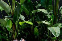 Garden Ideas - Edwin St, Tempe