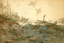Paleontology in XIX century
