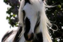 Horses , ponies and foals