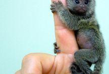 Super cute critters