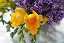 Flower / Gardening