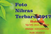 foto nibras terbaru 2017 / foto nibras terbaru 2017  Telp/SMS: 0812-3831-280 Whatsapp: +628123831280 PinBB: 5F03DE1D