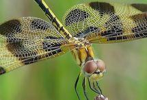 DRAGONFLIES / by Beth Owens