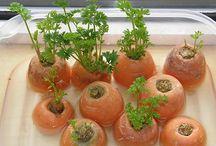 warzywne sadzonki i inne