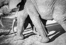 Steven Cox Instagram Photos When we visited Kenya... #blackandwhite #elephant #travel #kenya #africa