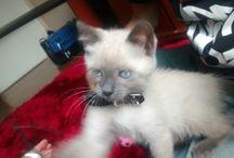 Lumos- my cat