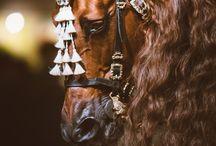 Lovak / mindenféle/  fajta ló különböző élethelyzetekben szóval minden ami ló :)