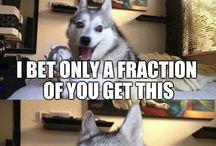 Laughing dog jokes