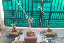 Sandstone Planters in India