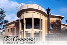 The Commons & Stingers