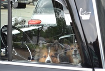 Pets love Cool Rides