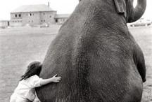 Animal Love / by Christy Bullins