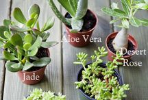 Succulents idea