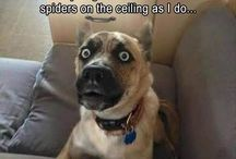 Funny Dogs / If you like funny dog pictures please follow this board. We guarantee that we will make you laugh :)