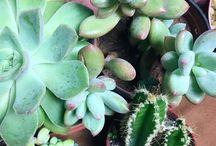 Decor com plantas