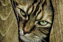 gatti- cats- gatos / miaoooo