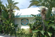 Sunny Place / Tropical, well-maintained studio, one and two bedroom apartments are available in this one-story triplex on A-1-A, just one block from one of South Florida's most pristine, award-winning beaches with lifeguards.  Miles of shoreline allow for long, uninterrupted runs or walks. Looking north, you'll see our fishing pier and lighthouse.