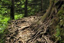 fotografia tree