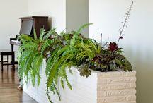 Дома растения