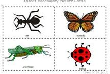 gradi insecte