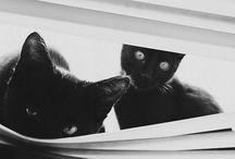 Animals / by Joanna Konca