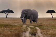 Wonderful animals that inspire us