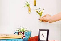 Indoor Planting / by Teresa Evans