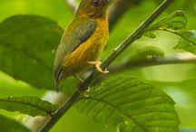 Tropisk fugle