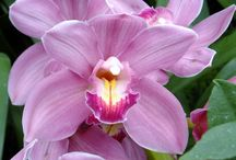 Chicago Botanic Gardens / Flowers & Fauna at the Gardens