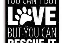 Adopt(pets)! Don't Shop! (Nothing Sad) / Please ONLY HAPPY Adoption Pics & Stories! NO SAD PICS OR STORIES!!! / by Jelly Tree Jewelry
