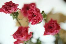 入賞作品『ドライフラワーのある暮らし』フォトコンテスト / http://greensnap.jp/contest/45
