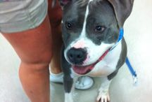 Pet adoption / Zeus Corner wants to help to find home for rescue pets.