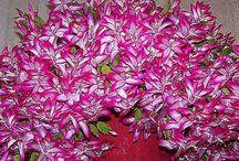 kvety a zahrada