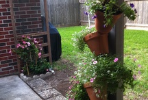 Love our backyard / by Eddie Wilson