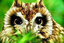 """""""Owl-Tastic"""""""