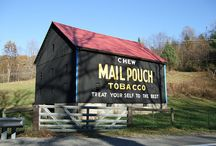 Mail Pouch Tobacco Barns